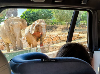 elefant zoo safari puglia italia